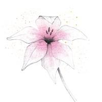 Pink Graphite Flower V Fine Art Print