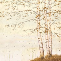 Golden Birch II Off White Fine Art Print