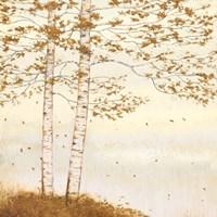 Golden Birch I Off White Framed Print