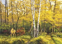 Whitetail Deer In Fall Fine Art Print