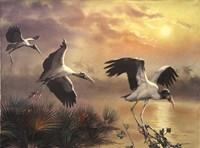 Woodstorks Fine Art Print