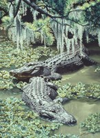 Alligators Fine Art Print