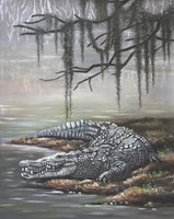 American Crocodile Fine Art Print