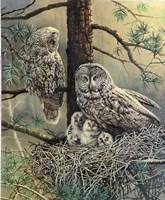 Great Gray Owl  Family Fine Art Print