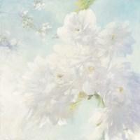 Pear Blossoms Fine Art Print