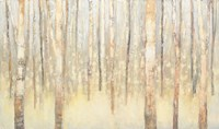Birches in Winter Fine Art Print