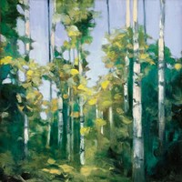 Birches Fine Art Print