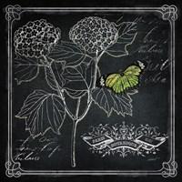 Chalkboard Botanical I Fine Art Print