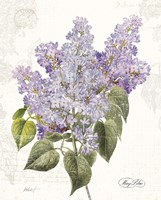 May Lilac on White Fine Art Print