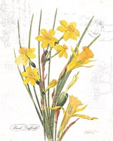 March Daffodil on White Fine Art Print