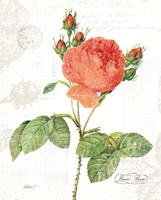 June Rose on White Fine Art Print