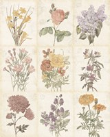 Flowers of the Month 9 Patch Vintage Fine Art Print