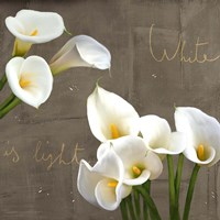 White Callas Fine Art Print