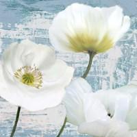 Washed Poppies (Aqua) II Fine Art Print