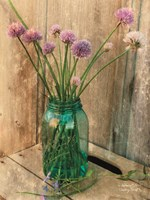 Country Chives Fine Art Print