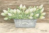 Flowers & Garden Tulips Fine Art Print