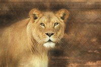 Tribal Lioness Fine Art Print