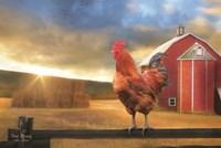Good Morning Rooster Fine Art Print