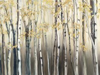 Golden Birch III Fine Art Print