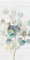 Eucalyptus III on Shiplap Crop Fine Art Print