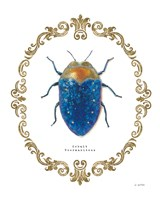 Adorning Coleoptera V Fine Art Print