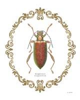Adorning Coleoptera VI Fine Art Print