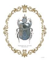 Adorning Coleoptera IV Fine Art Print