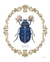 Adorning Coleoptera III Fine Art Print