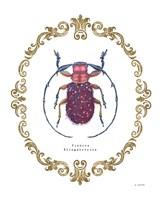 Adorning Coleoptera II Fine Art Print