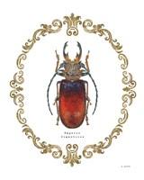 Adorning Coleoptera I Fine Art Print