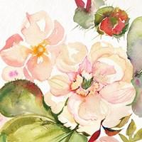 Desert Rose III Fine Art Print