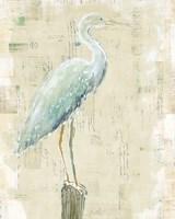 Coastal Egret I v2 no Aqua Fine Art Print
