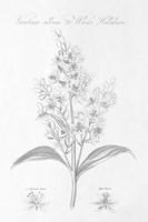 Botany Book XI Fine Art Print