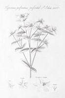 Botany Book X Fine Art Print