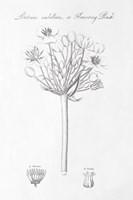 Botany Book VII Fine Art Print