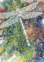 Dragonfly Fine Art Print