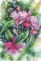 Pink Orchid Fine Art Print