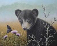 Curious Cub Fine Art Print