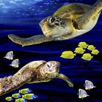 Sea Creatures Turtle Framed Print