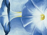 Blue Morning Glories Fine Art Print