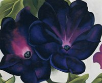 Black and Purple Petunias Fine Art Print