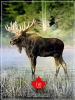 Moose Canada 150th Anniversary Fine Art Print