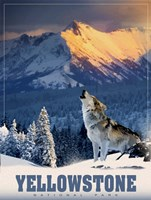 Yellowstone Wolf Fine Art Print