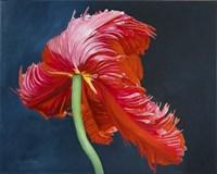 Carmen Fine Art Print