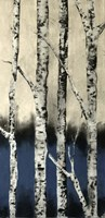 Winter Birch Fine Art Print
