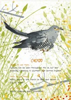 Cuckoo Postcard Fine Art Print