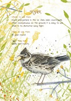 Skylark Postcard Fine Art Print