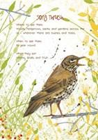 Song Thrush Postcard Fine Art Print
