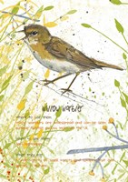Willow Warbler Postcard Fine Art Print