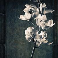 Orchids Stem Texture Fine Art Print